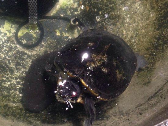 Regulo : Raúl - während des Abendgeschäfts lebt er im Brunnen des Hauptraums