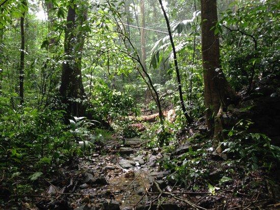 Jungle Palace: jungle jungle