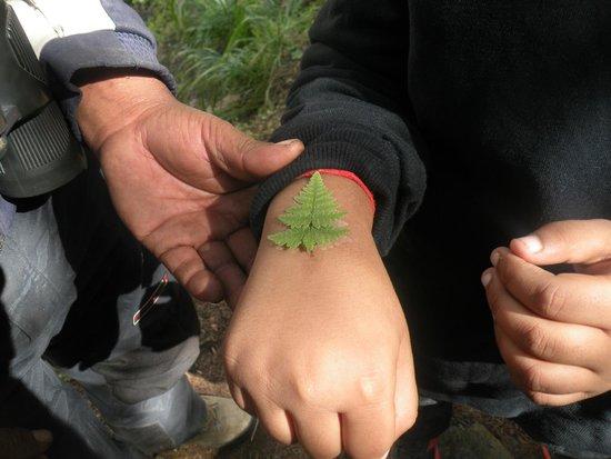 Джошиматх, Индия: Tattoo Tree