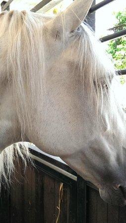 Caballerizas Reales de Cordoba: Uno de los caballos