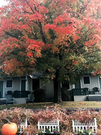 Northway Motel: Beautiful fall color in front of room