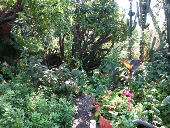 Villa Elisa: Le jardin
