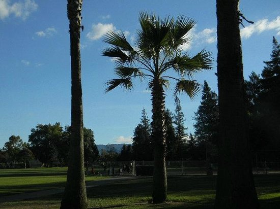 Photo of Park Las Palmas Park at 850 Russet Dr, Sunnyvale, CA 94087, United States