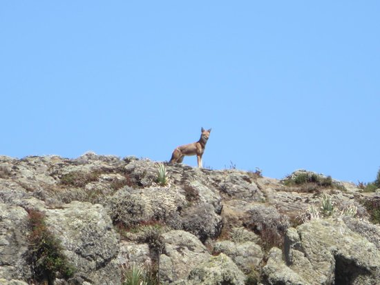 Bale Mountains: Ethiopian wold