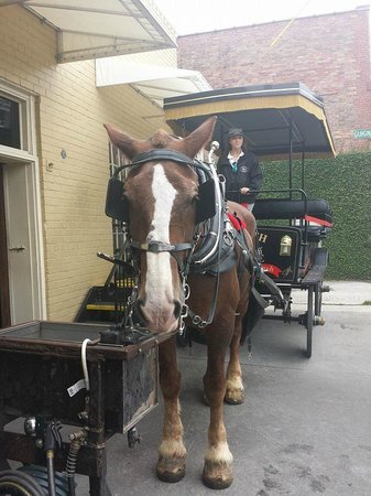 Old South Carriage Company: Elizabeth and John (the horse)