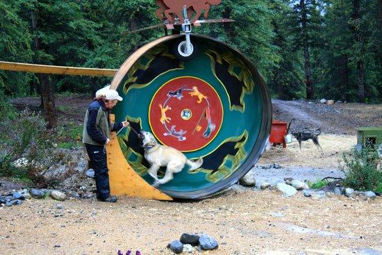 The Dogs Love To Run The Wheel Picture Of Husky Homestead - Husky homestead