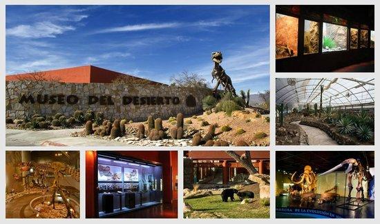 Saltillo, Meksyk: Museo del Desierto