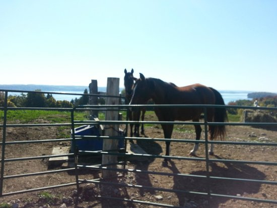 Elmhirst's Resort : Horses for riding and petting