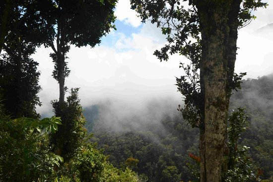 Dantica Cloud Forest Lodge: Bosque Nuboso