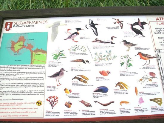 Grotta Lighthouse: Sign board with local bird species