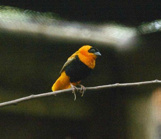 Weaver Bird, Zoo Boise