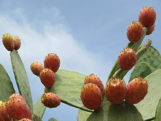 La Manna Di Zabbra: cactusfruit!
