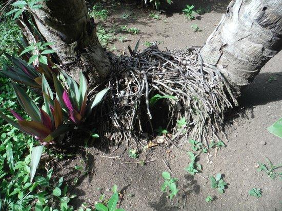 Macaw Bank Jungle Lodge: Outside Cabana