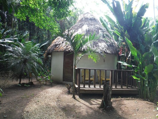 Macaw Bank Jungle Lodge: Cabana