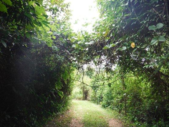 Macaw Bank Jungle Lodge: One of many trails