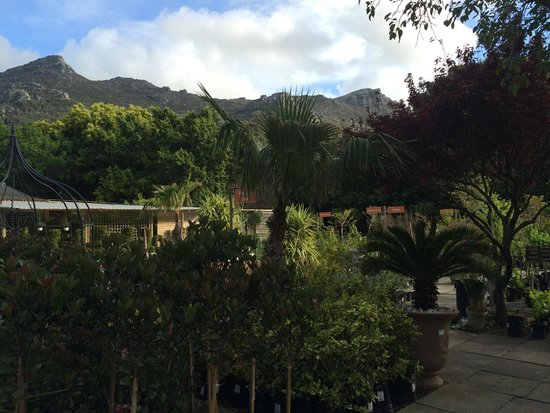 EARTHWORX GARDEN CAFE, Hout Bay - Restaurant Reviews, Photos & Phone Number  - Tripadvisor