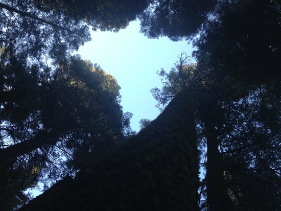 Crane Flat Campground : looking up from our campsite