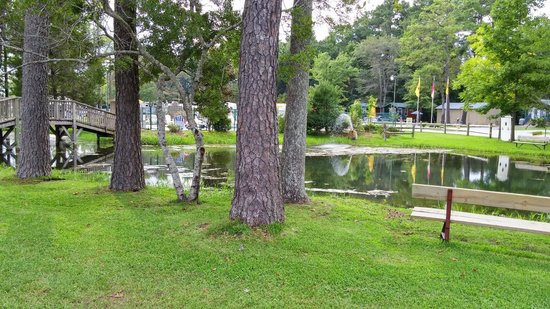 New Bern KOA : catch and release pond, pool and cabin in the distance