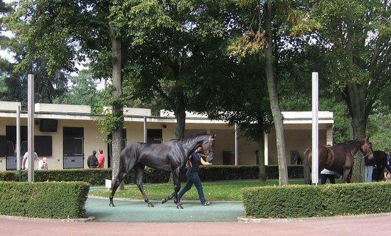 Hippodrome d'Auteuil : The Paddock, Beautiful horse