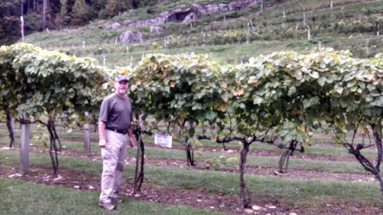 Grandfather Vineyard & Winery: Checking out the grapes