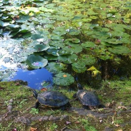 Orto Botanico di Lucca: Stagnetto e Tartarughe