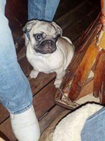Corazon De Maguey: Perrito en terraza