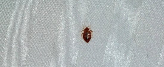 Paradise Stream Resort: One of the Bed Bugs