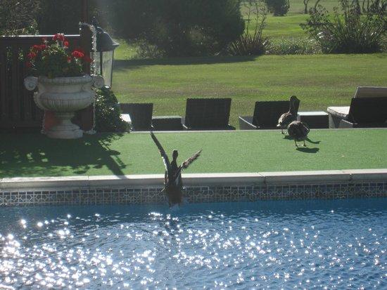 La Grande Mare: Even the ducks enjoy a swim!