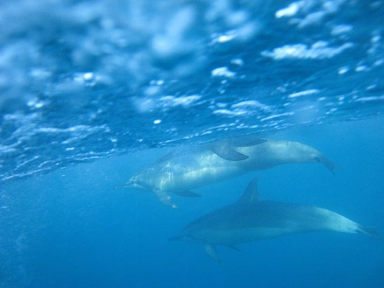 Kilauea, Hawái: DOLPHINS! I had to hang myself off the side of the boat to stick my camera underwater, worth it.