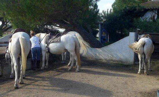 Promenade à cheval, Chez Elise : De magnifiques chevaux soignés par Elise !