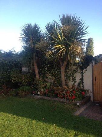 Pebble Mill B & B: palm trees in Dublin!