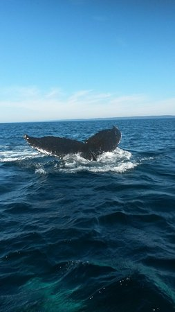 Petit Pasage Whale Watch : Awesome!