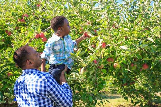 DuBois Farms: Apple Picking