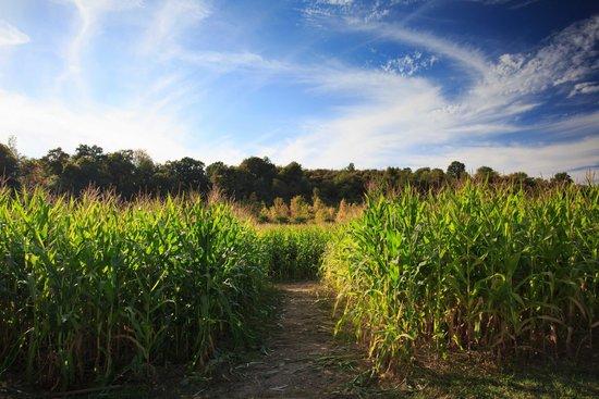 DuBois Farms: Corn Maze