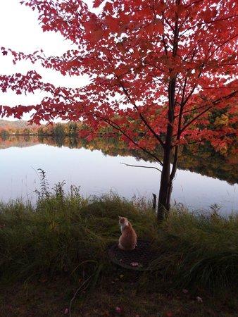 Auberge du Coq de Montagne - Lac Moore à l'automne