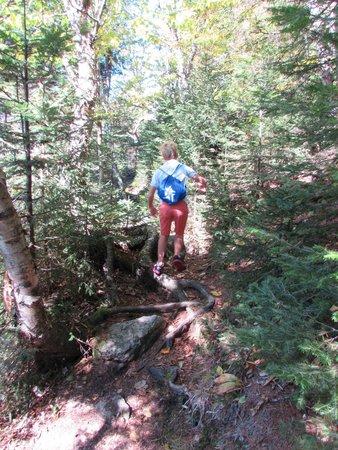 Mount Ascutney: Hang Glider Trail