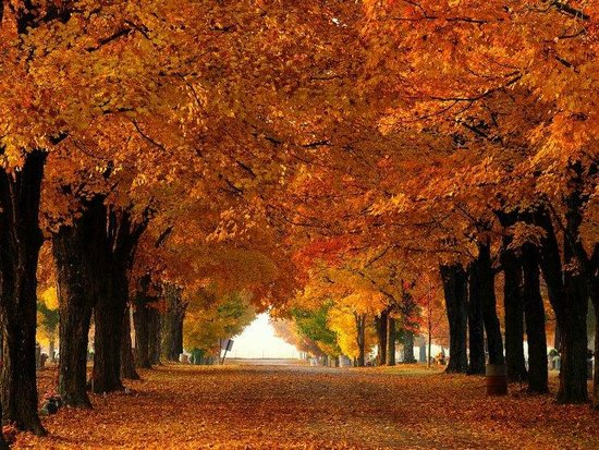 Maplewood Cemetery: Fall colors