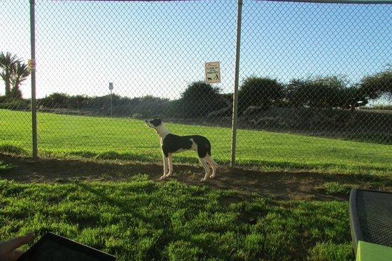 Ocean Villa Inn : the dog run outside the room