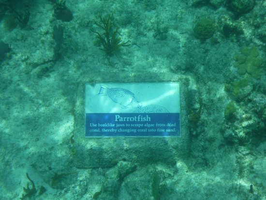National Park Underwater Trail: trail marker