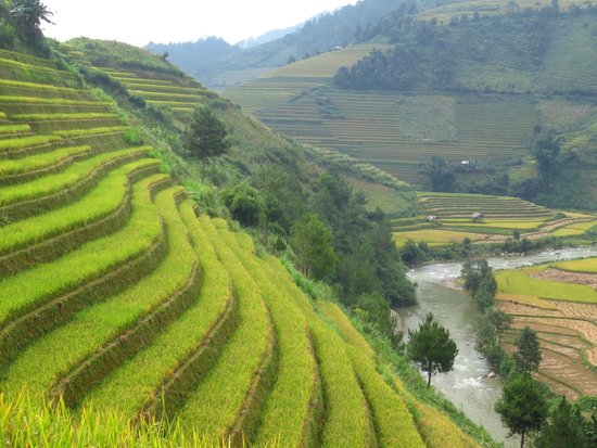 Footprint Vietnam Travel Day Tours: Terraced paddy fields everywhere