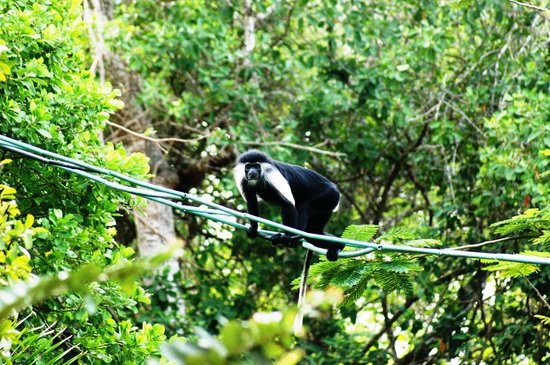 ‪Colobus Conservation‬