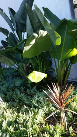 Hotel Maya - a DoubleTree by Hilton Hotel: Excellent array of plant life