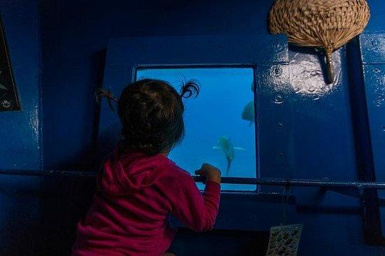 Raro Reef Sub: Underwater