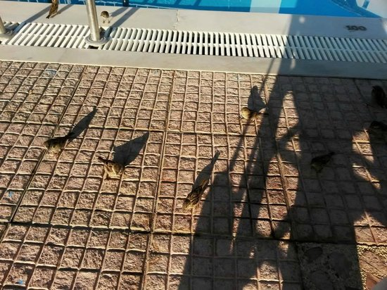 Apartments George: Little sparrows at the pool