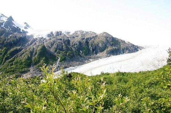 Exit Glacier Guides - Day Tours: View on glacier