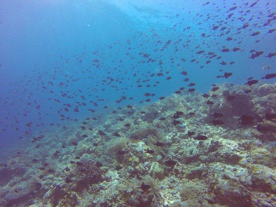 Living Colours Dive Resort: Bunaken diving