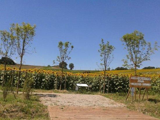 Parco Archeologico Pava