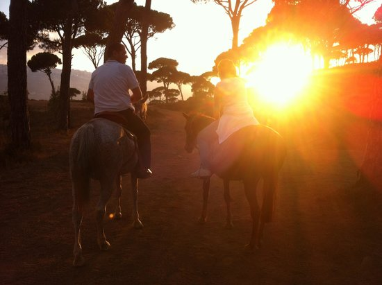Pineland Hotel and Health Resort : horse riding