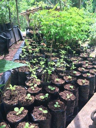 El Zopilote : New plants!!