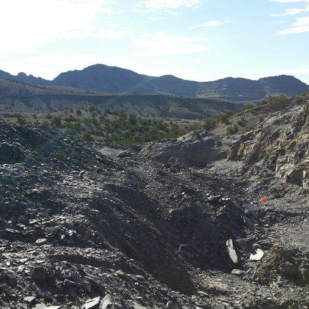 U-Dig Fossils : Quarry